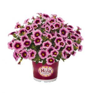Calibrachoa Hula Soft Pink