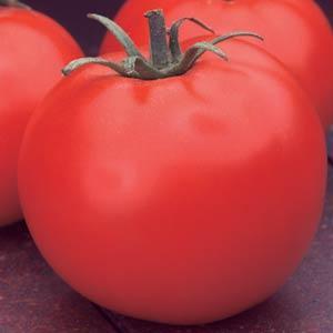 Tomate Celebrity