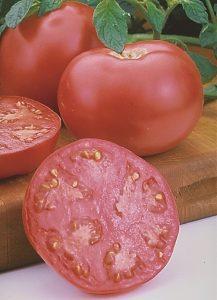 Tomate Pink Girl