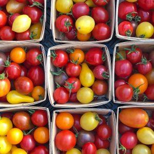 Tomates en mélange petits fruits -bio- Jardins Écoumène