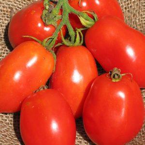 Tomate Ropreco Paste -bio- Jardins Écoumène