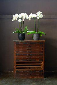 Pot orchidée plastique noir