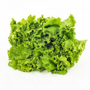 Laitue frisée verte – semences en ruban