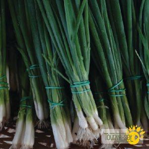 Échalote vert Parade – oignon vert