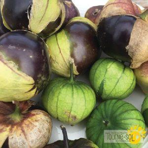 Tomatillo Mauve