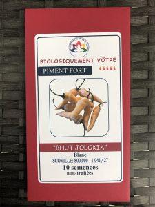 Piment Fort «Bhut Jolokia» blanc – non traité