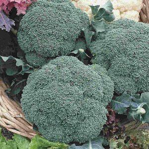 Broccoli «Green Sprouting» – BIO