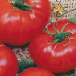 Tomato «Brandywine Red» – BIO