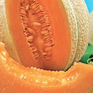 Cantaloup «Hearts of Gold» – BIO