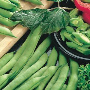 Haricot «Tendergreen Imp» (Nain) – BIO