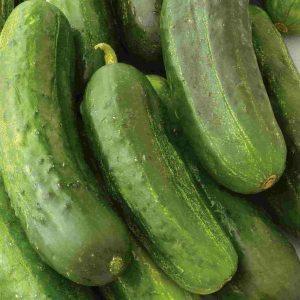 Concombre «National Pickling» – en ruban – BIO