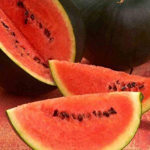 Melon d Eau «Sugar Baby» – BIO