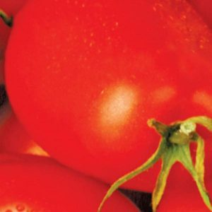 Tomate Roma «Sow Easy»