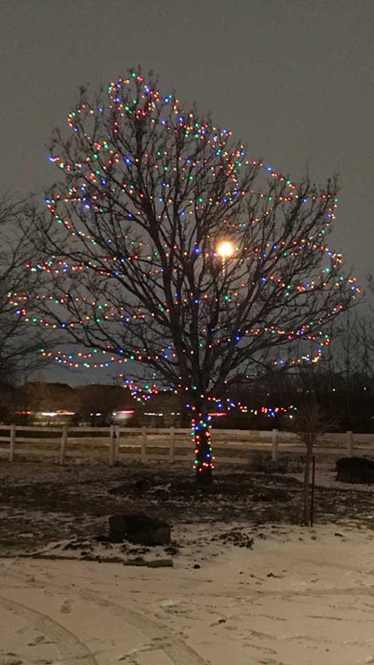 Lumière de Noël installées dans une grand arbre