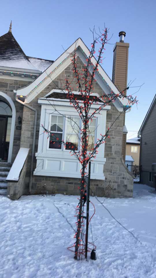 Lumières de Noël dans un arbre