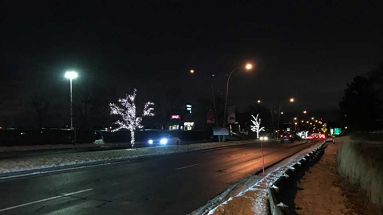 Arbres de rue avec lumières de Noël