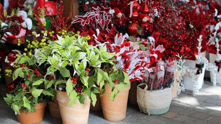 Plantes de Noël et poinsettias