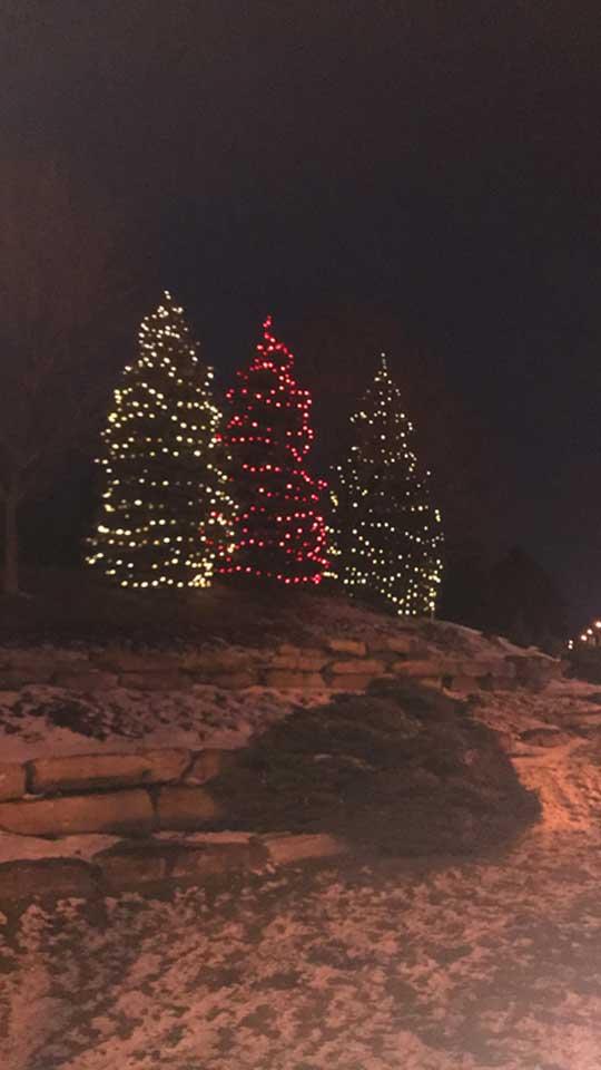 trio de sapins de Noël avec lumières
